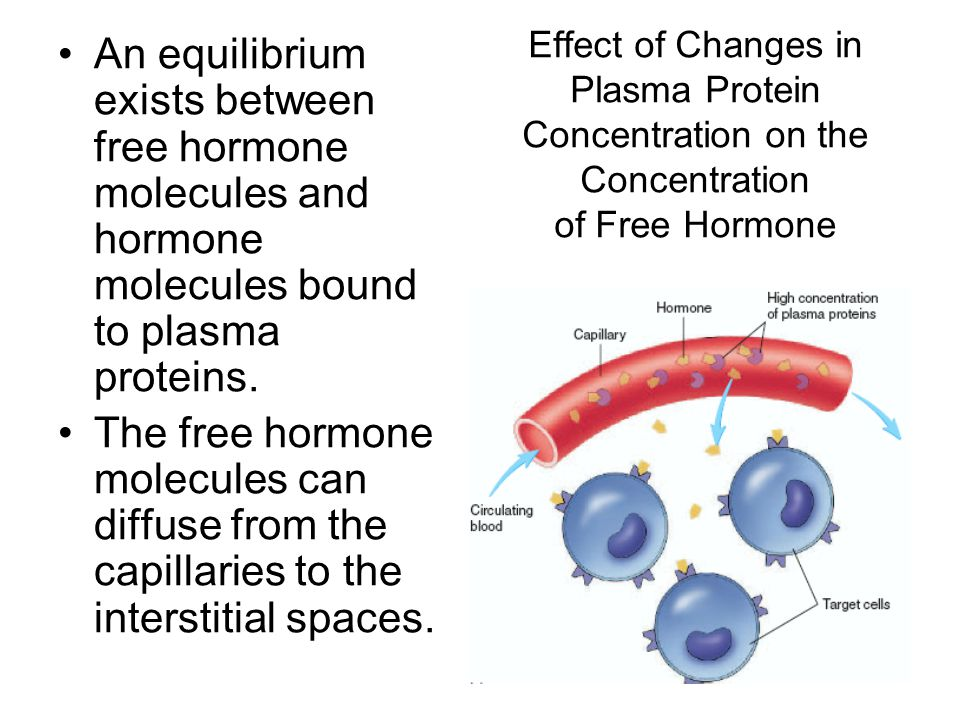 Effect of Changes in Plasma Protein Concentration on the Concentration of Free Hormone An equilibrium exists between free hormone molecules and hormon
