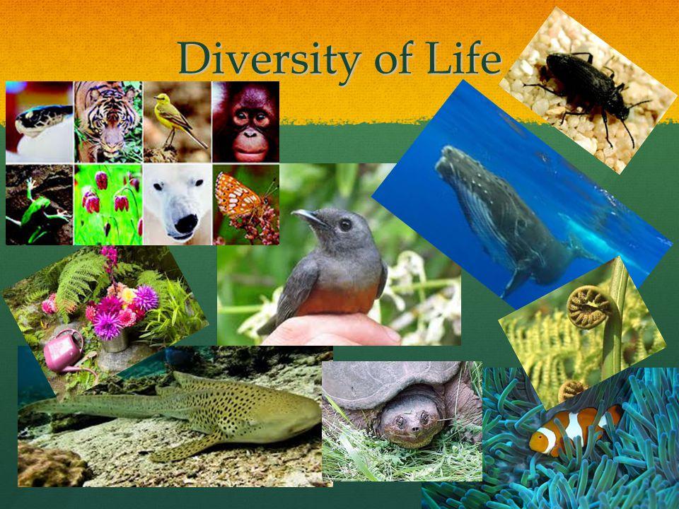 Biodiversity Diversity of life on earth Diversity of life on earth