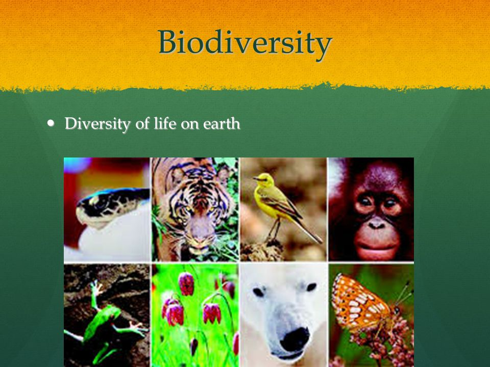 Biodiversity Vocab word: Vocab word: Species: A depiction of species as groups of individuals capable of fertile interbreeding) Species: A depiction of species as groups of individuals capable of fertile interbreeding) Every year, biologists discover 10,000 new species Every year, biologists discover 10,000 new species Every year it is estimated over 50,000 species die out Every year it is estimated over 50,000 species die out