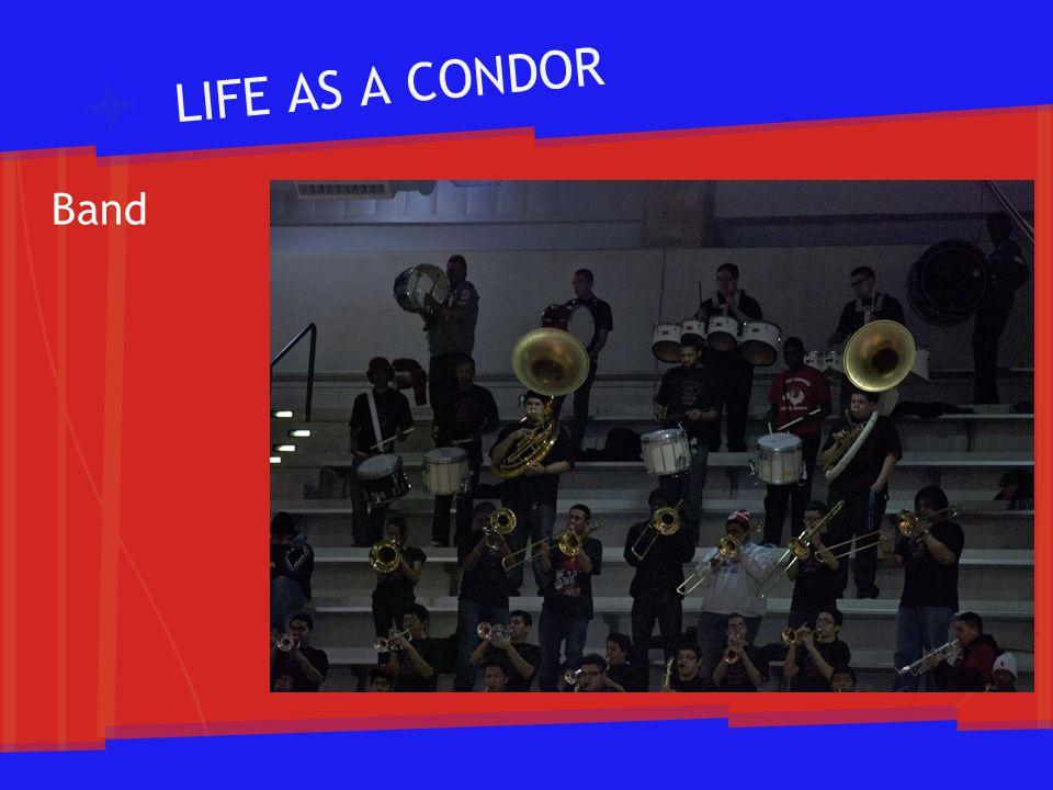 LIFE AS A CONDOR Band