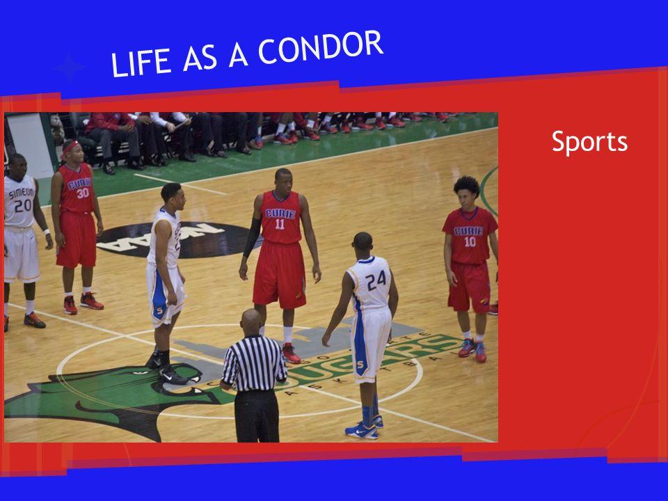 LIFE AS A CONDOR Sports