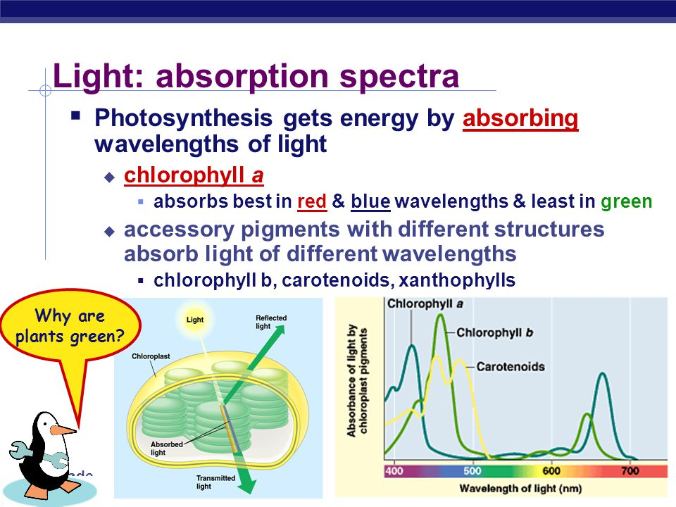 9th Grade Biology A Look at Light  The spectrum of color ROYGBIV