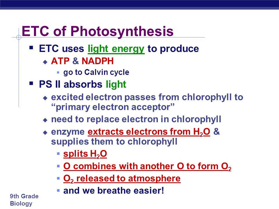 9th Grade Biology split H 2 O ETC of Photosynthesis O ATP to Calvin Cycle H+H+ H+H+ H+H+ H+H+ H+H+ H+H+ H+H+ H+H+ H+H+ H+H+ H+H+ e e e e sun