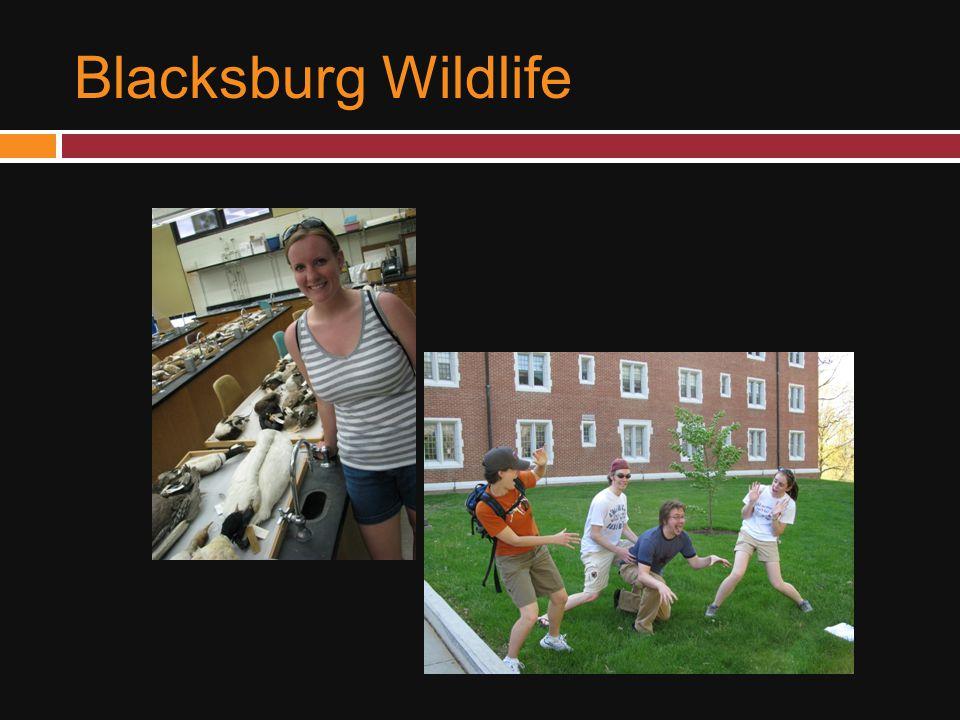 Blacksburg Wildlife