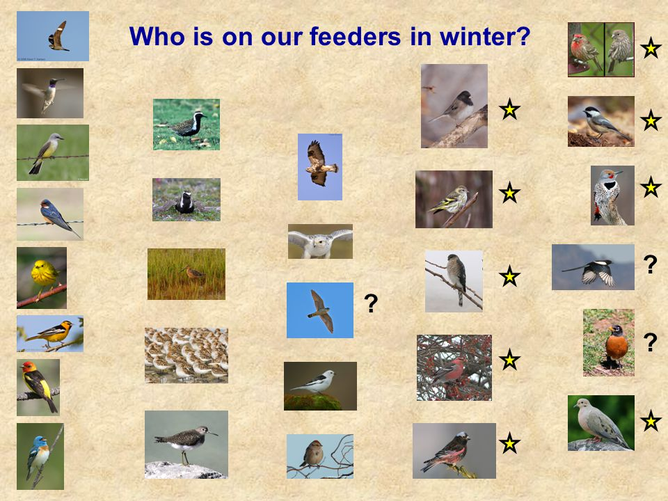 Who is on our feeders in winter