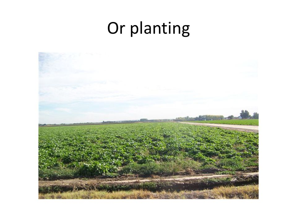 Or planting