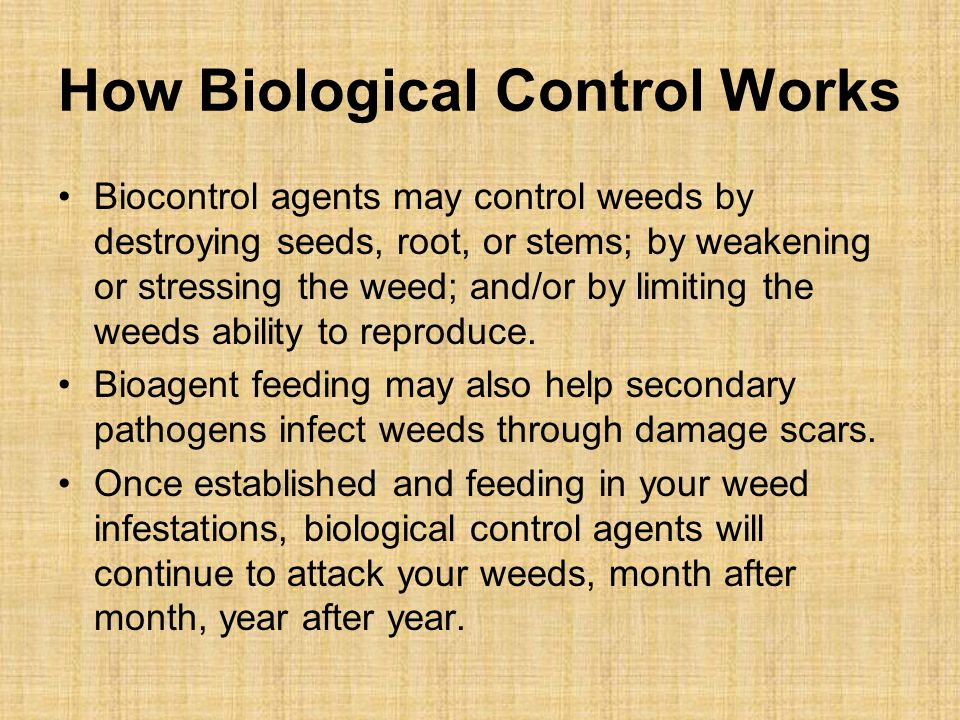 How Biological Control Works Biocontrol agents may control weeds by destroying seeds, root, or stems; by weakening or stressing the weed; and/or by limiting the weeds ability to reproduce.