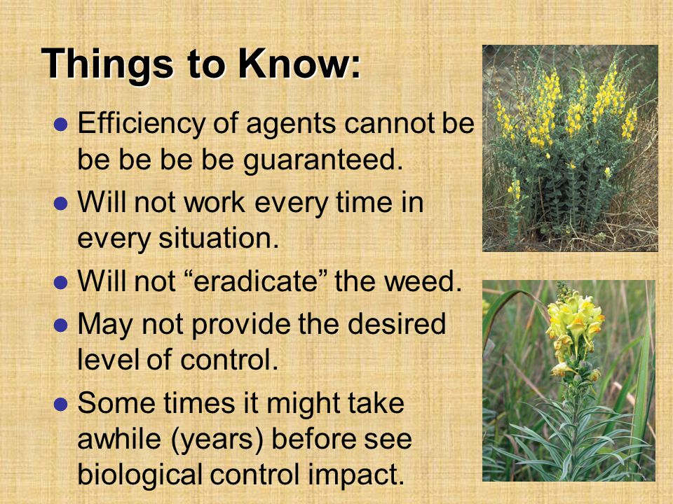Things to Know: Efficiency of agents cannot be be be be be guaranteed.