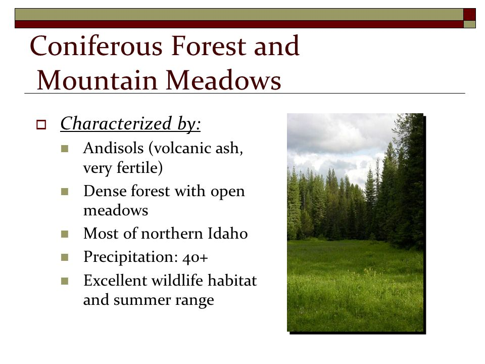  Characterized by: Andisols (volcanic ash, very fertile) Dense forest with open meadows Most of northern Idaho Precipitation: 40+ Excellent wildlife