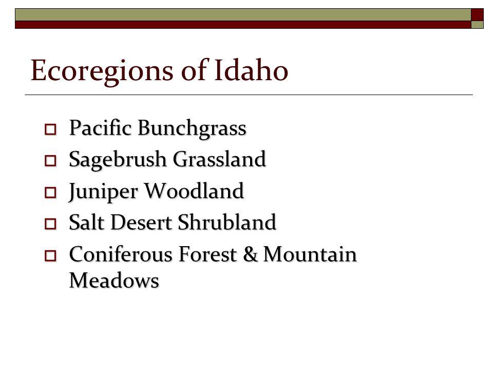  Pacific Bunchgrass  Sagebrush Grassland  Juniper Woodland  Salt Desert Shrubland  Coniferous Forest & Mountain Meadows Ecoregions of Idaho