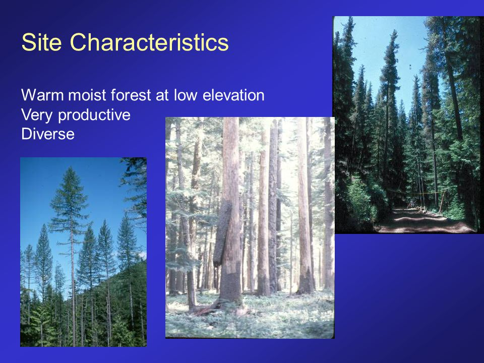 Site Characteristics Warm moist forest at low elevation Very productive Diverse