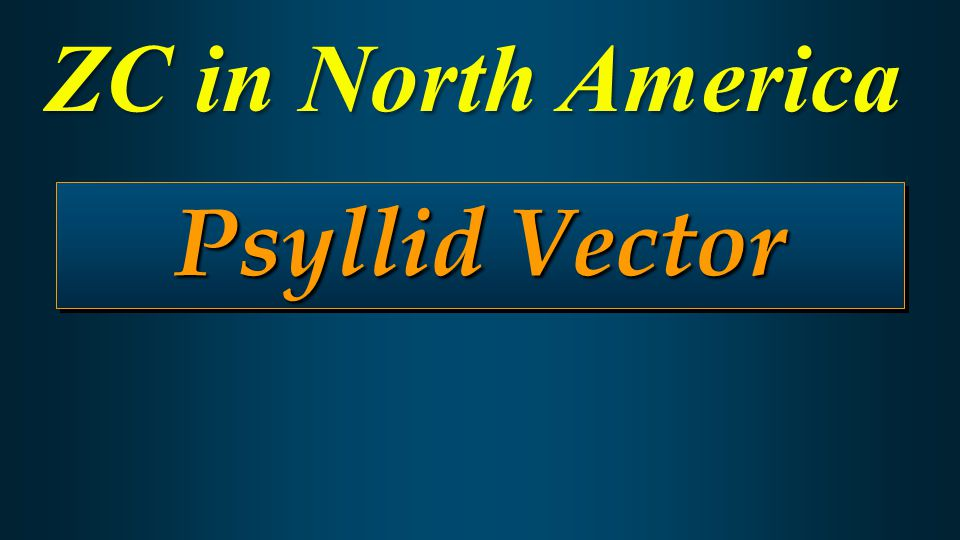 Psyllid Vector ZC in North America