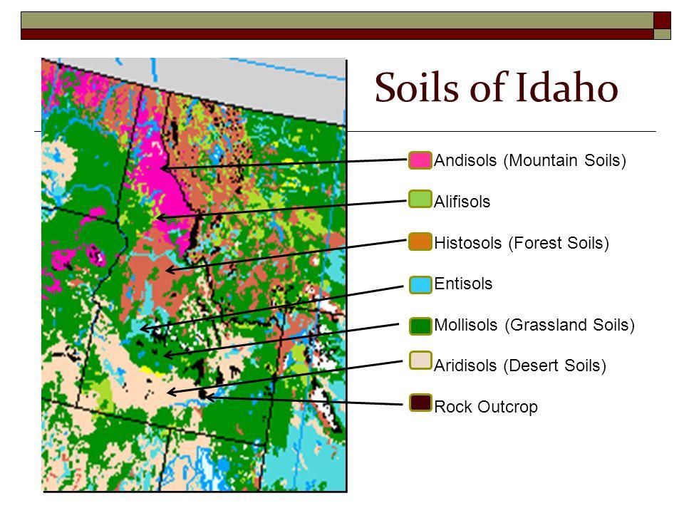 Andisols (Mountain Soils) Alifisols Histosols (Forest Soils) Entisols Mollisols (Grassland Soils) Aridisols (Desert Soils) Rock Outcrop Soils of Idaho