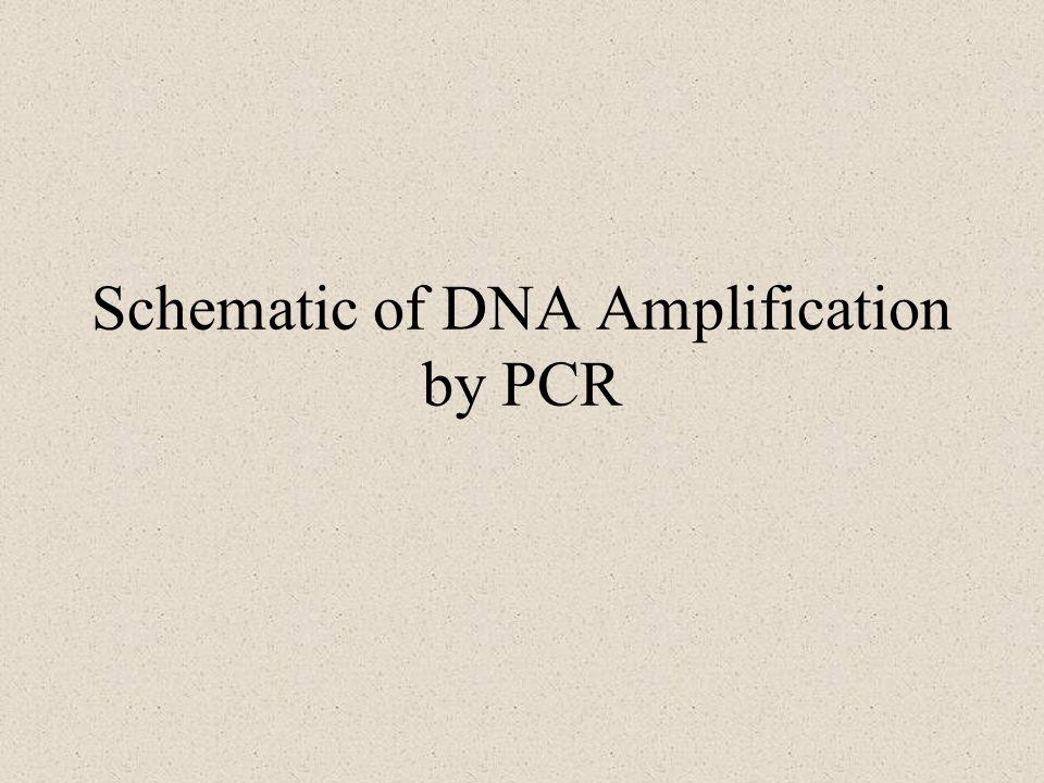Schematic of DNA Amplification by PCR