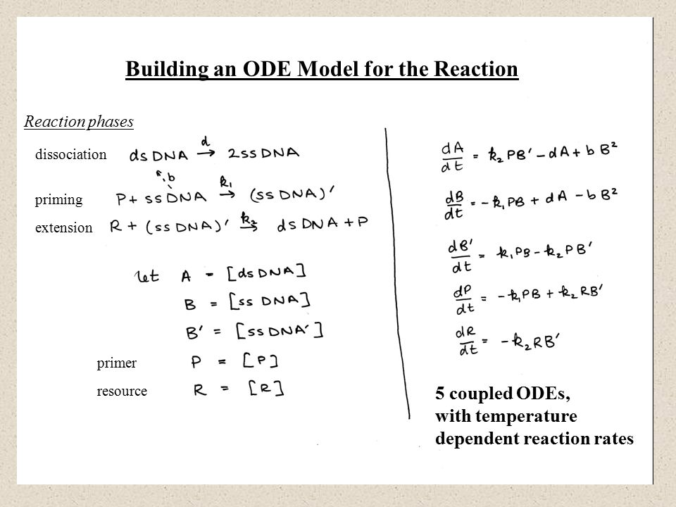 Building an ODE Model for the Reaction dissociation priming extension Reaction phases primer resource 5 coupled ODEs, with temperature dependent reaction rates
