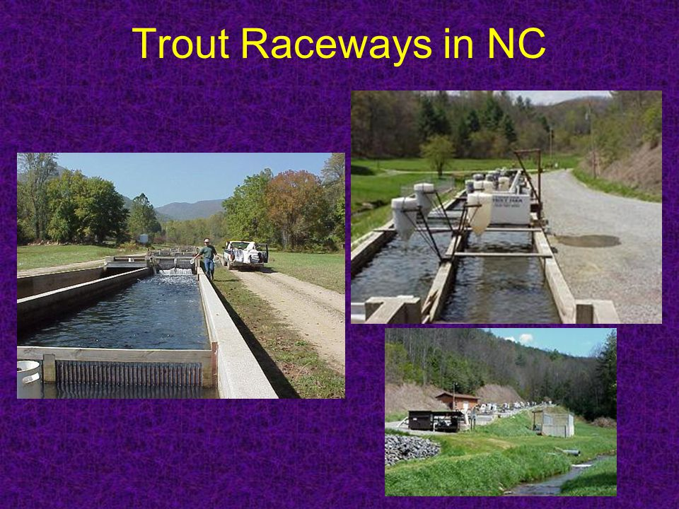 Trout Raceways in NC