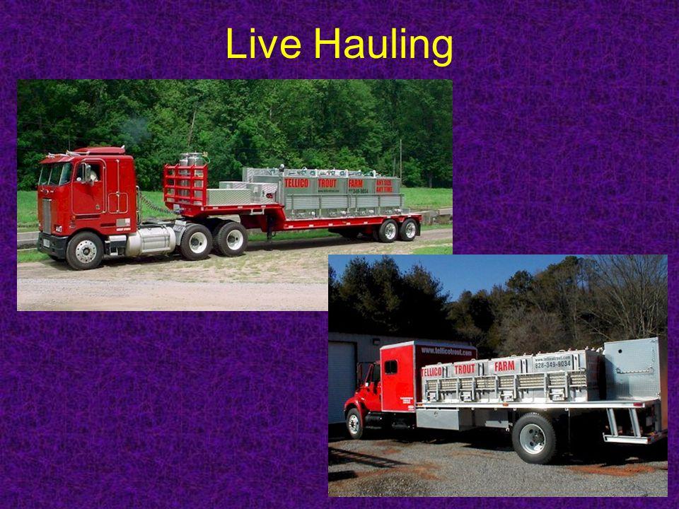 Live Hauling