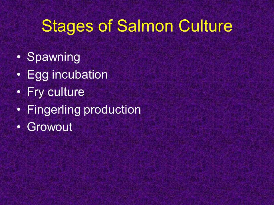 Stages of Salmon Culture Spawning Egg incubation Fry culture Fingerling production Growout
