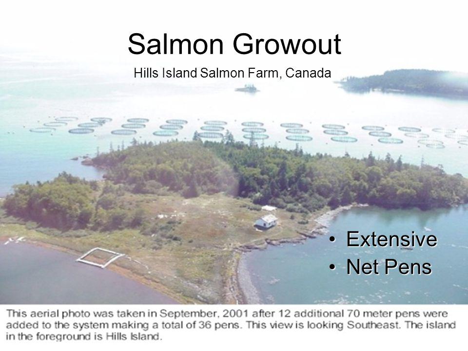 Salmon Growout ExtensiveExtensive Net PensNet Pens Hills Island Salmon Farm, Canada