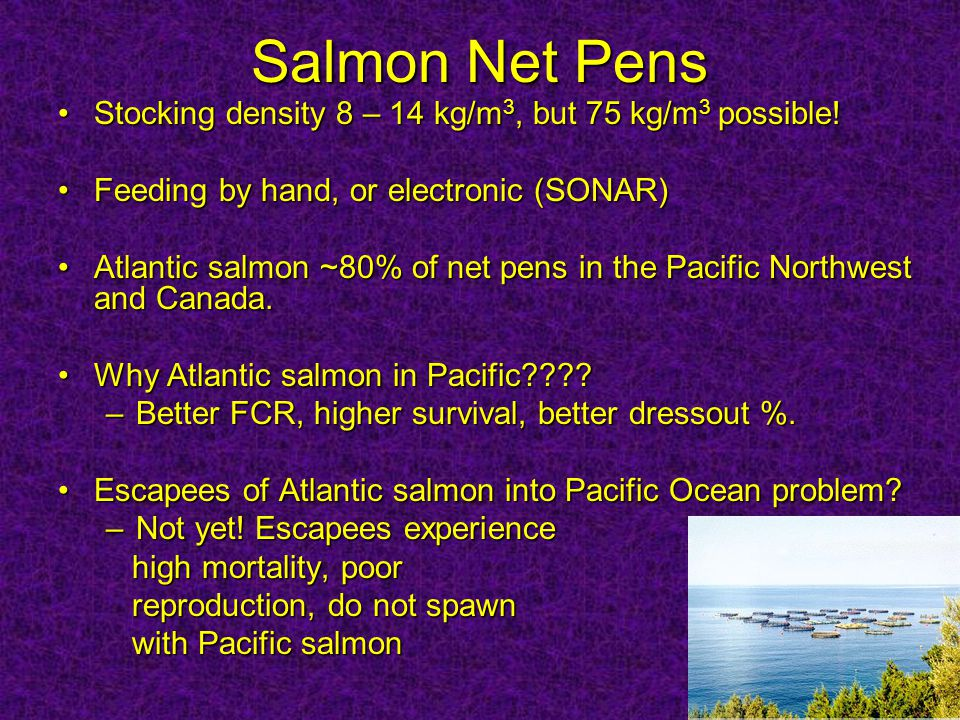 Salmon Net Pens Stocking density 8 – 14 kg/m 3, but 75 kg/m 3 possible!Stocking density 8 – 14 kg/m 3, but 75 kg/m 3 possible.