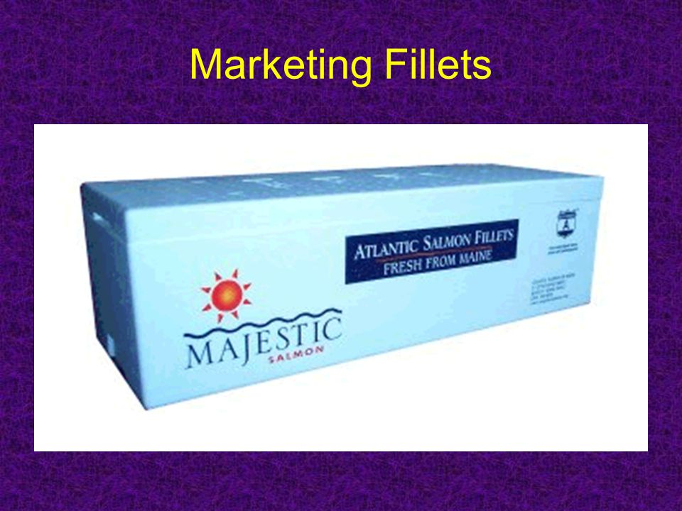 Marketing Fillets