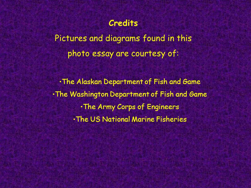 Credits Pictures and diagrams found in this photo essay are courtesy of: The Alaskan Department of Fish and Game The Washington Department of Fish and Game The Army Corps of Engineers The US National Marine Fisheries