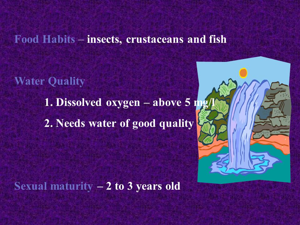 Food Habits – insects, crustaceans and fish Water Quality 1.