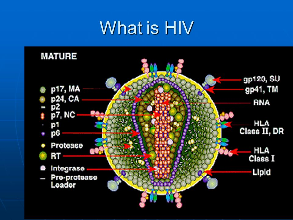 FALSE 41% of the cases of HIV infection in Idaho occur in ages 20-29 years and 41% of the cases of HIV infection in Idaho occur in ages 20-29 years and 15% of AIDS cases are in this age group 15% of AIDS cases are in this age group