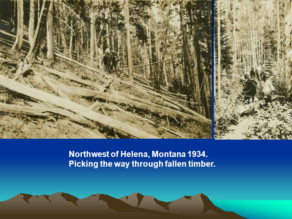 Northwest of Helena, Montana 1934. Picking the way through fallen timber.