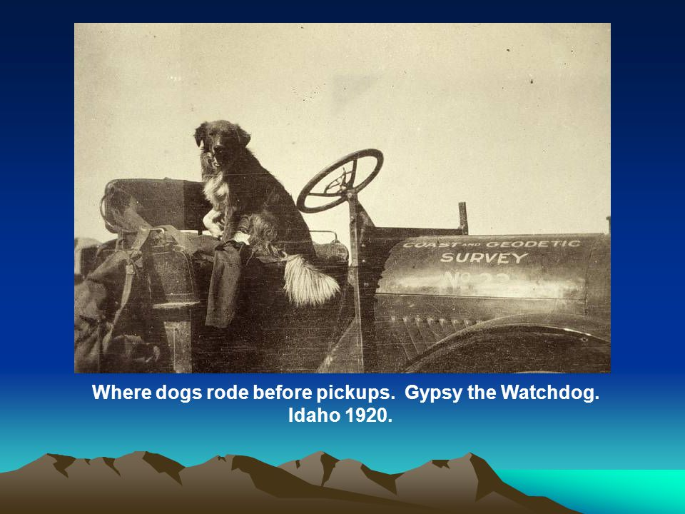 Where dogs rode before pickups. Gypsy the Watchdog. Idaho 1920.