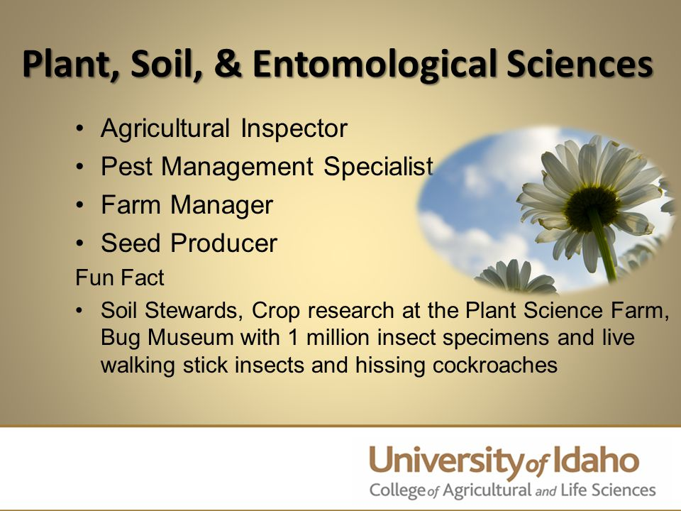 Plant, Soil, & Entomological Sciences Agricultural Inspector Pest Management Specialist Farm Manager Seed Producer Fun Fact Soil Stewards, Crop research at the Plant Science Farm, Bug Museum with 1 million insect specimens and live walking stick insects and hissing cockroaches