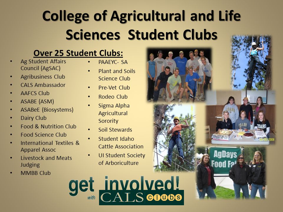 College of Agricultural and Life Sciences Student Clubs Over 25 Student Clubs: Ag Student Affairs Council (AgSAC) Agribusiness Club CALS Ambassador AAFCS Club ASABE (ASM) ASABeE (Biosystems) Dairy Club Food & Nutrition Club Food Science Club International Textiles & Apparel Assoc Livestock and Meats Judging MMBB Club PAAEYC- SA Plant and Soils Science Club Pre-Vet Club Rodeo Club Sigma Alpha Agricultural Sorority Soil Stewards Student Idaho Cattle Association UI Student Society of Arboriculture