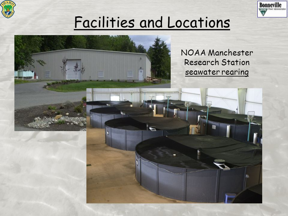 NOAA Manchester Research Station seawater rearing Facilities and Locations