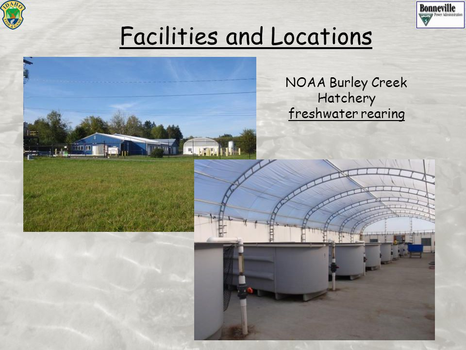 NOAA Burley Creek Hatchery freshwater rearing Facilities and Locations