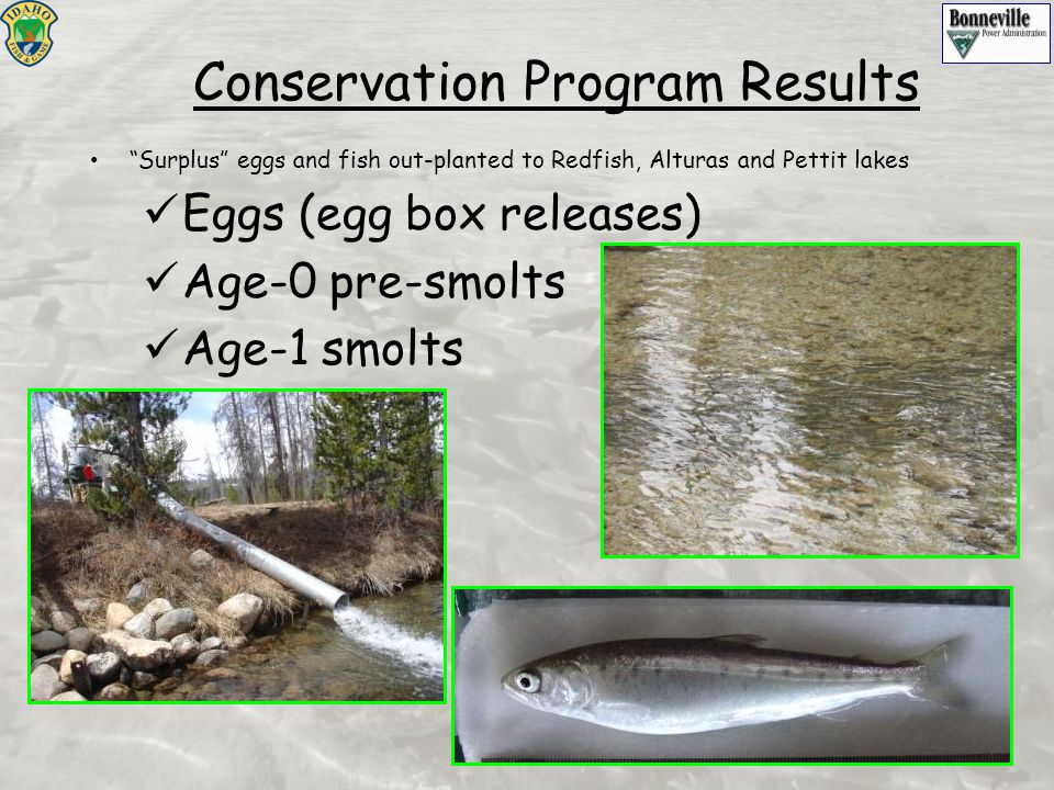 """Surplus"" eggs and fish out-planted to Redfish, Alturas and Pettit lakes Eggs (egg box releases) Age-0 pre-smolts Age-1 smolts Conservation Program Re"