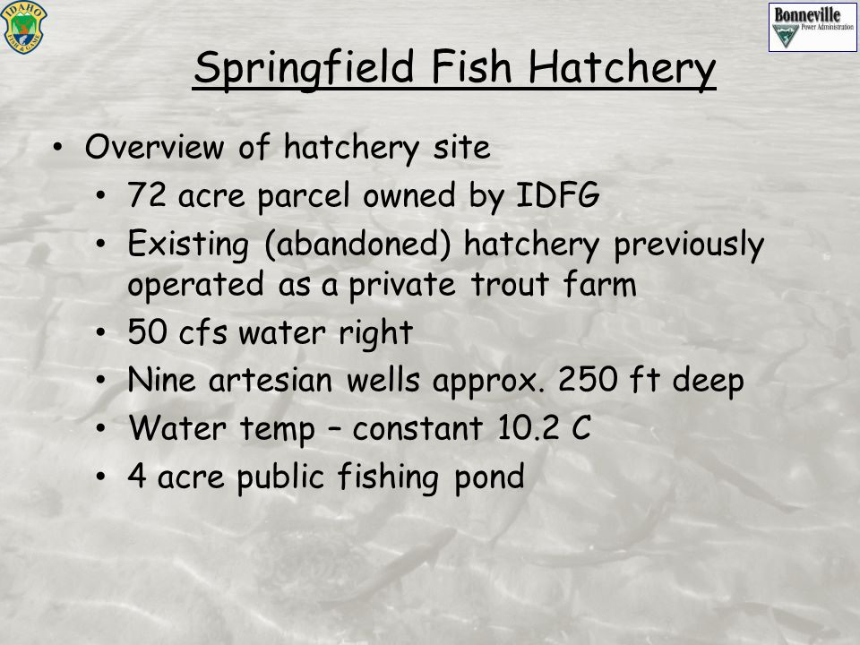 Overview of hatchery site 72 acre parcel owned by IDFG Existing (abandoned) hatchery previously operated as a private trout farm 50 cfs water right Ni