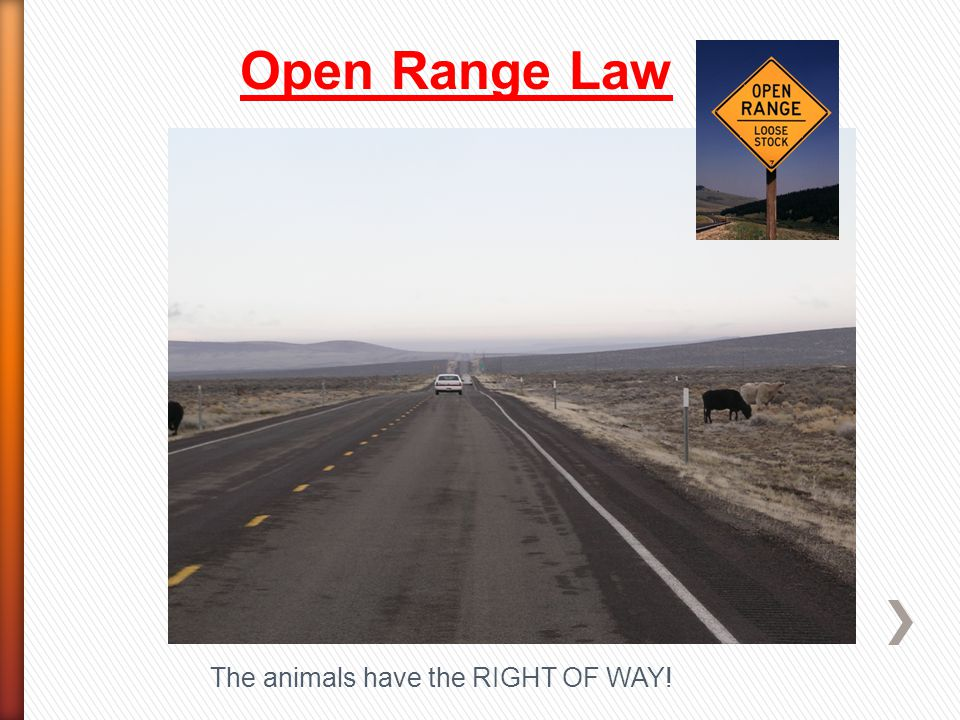 Open Range Law The animals have the RIGHT OF WAY!