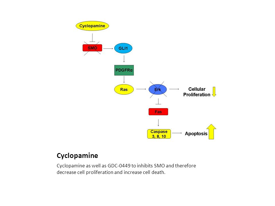 Cyclopamine Cyclopamine as well as GDC-0449 to inhibits SMO and therefore decrease cell proliferation and increase cell death.