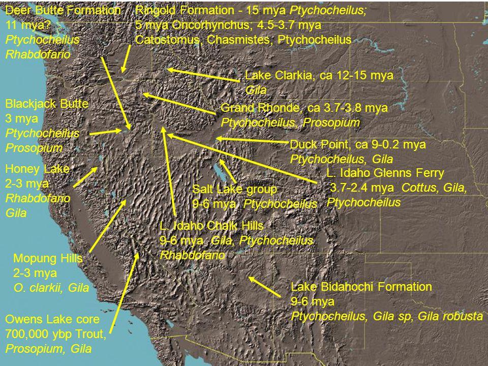 Lake Clarkia, ca 12-15 mya Gila L. Idaho Glenns Ferry 3.7-2.4 mya Cottus, Gila, Ptychocheilus L.
