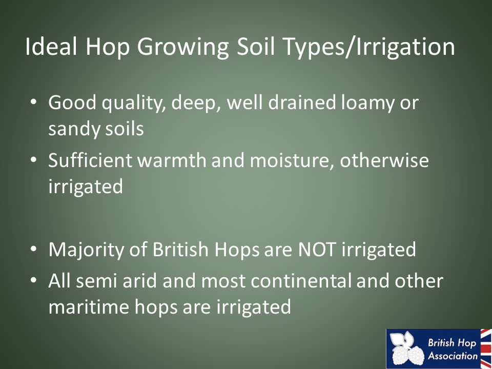 Ideal Hop Growing Soil Types/Irrigation Good quality, deep, well drained loamy or sandy soils Sufficient warmth and moisture, otherwise irrigated Majority of British Hops are NOT irrigated All semi arid and most continental and other maritime hops are irrigated