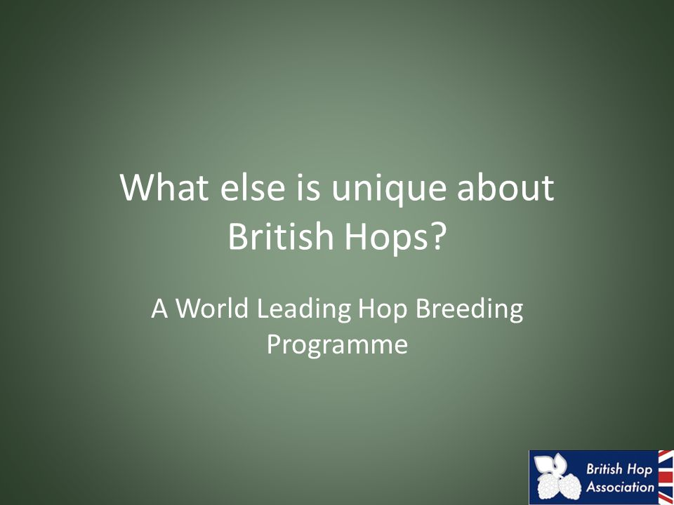 What else is unique about British Hops A World Leading Hop Breeding Programme