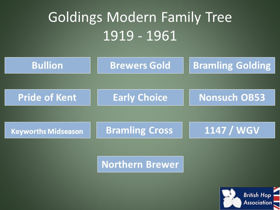 Goldings Modern Family Tree 1919 - 1961 Bramling GoldingBrewers GoldBullion Pride of Kent Northern Brewer Keyworths Midseason Nonsuch OB53 Bramling Cross 1147 / WGV Early Choice