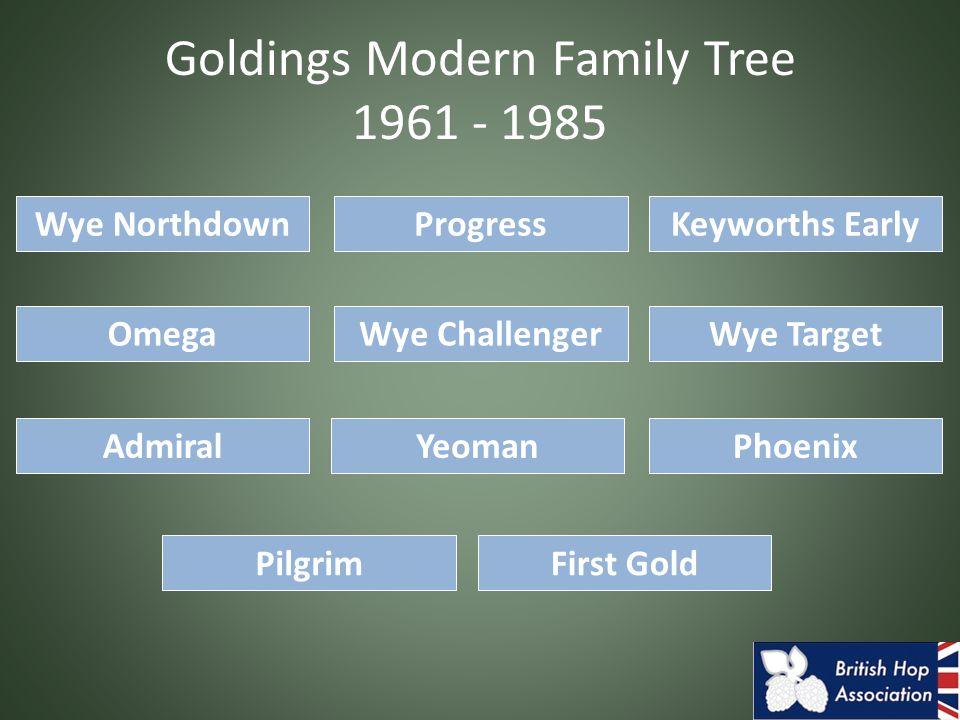 Goldings Modern Family Tree 1961 - 1985 Omega Keyworths EarlyProgressWye Northdown Wye Challenger First GoldPilgrim AdmiralPhoenixYeoman Wye Target