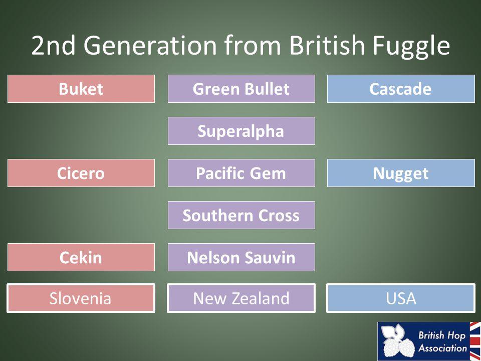 2nd Generation from British Fuggle Buket CiceroNugget Cascade SloveniaUSA Green Bullet New Zealand Cekin Superalpha Pacific Gem Southern Cross Nelson
