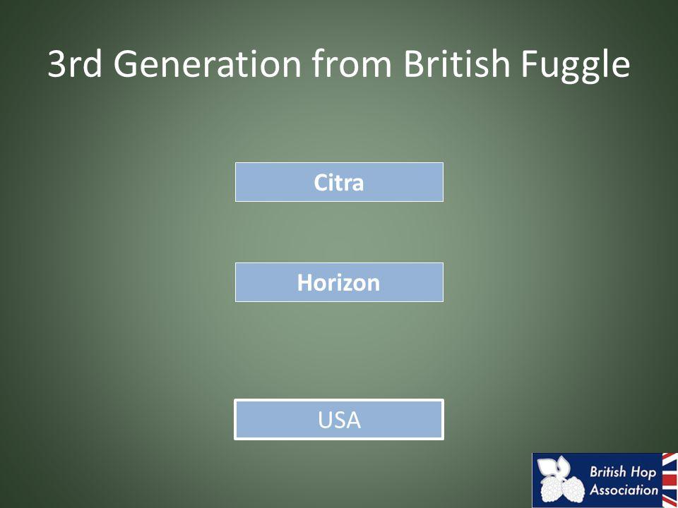 3rd Generation from British Fuggle Horizon Citra USA