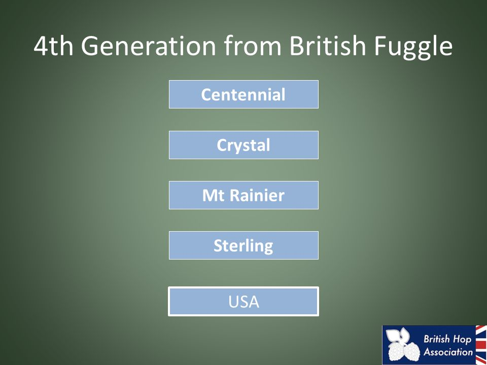 4th Generation from British Fuggle Sterling Centennial USA Crystal Mt Rainier