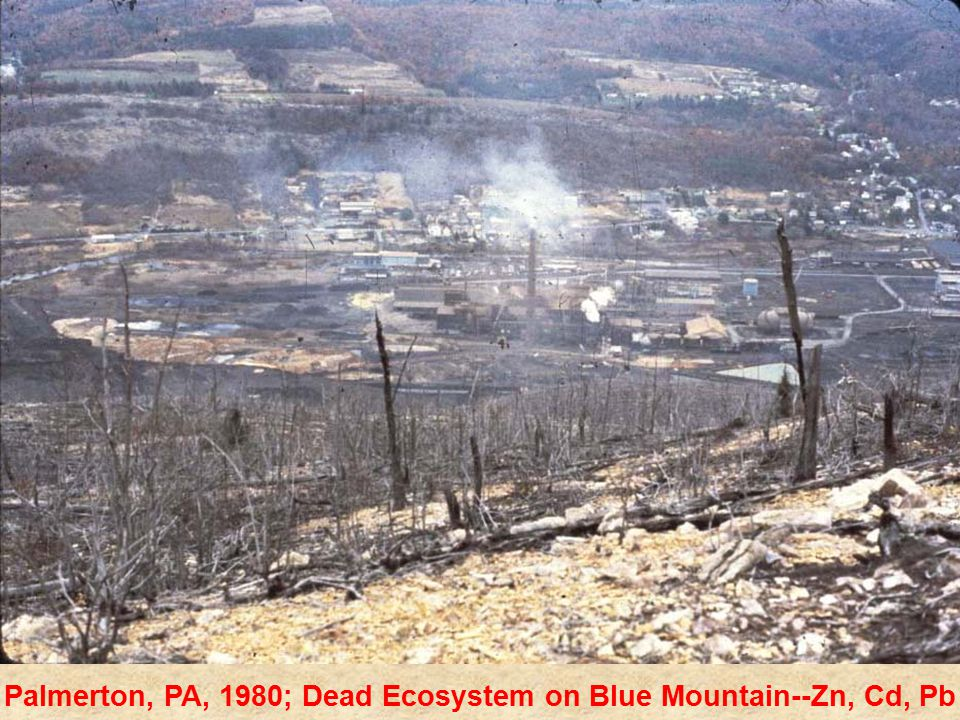 Palmerton, PA, 1980; Dead Ecosystem on Blue Mountain--Zn, Cd, Pb