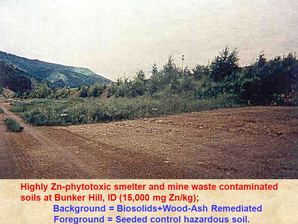 Highly Zn-phytotoxic smelter and mine waste contaminated soils at Bunker Hill, ID (15,000 mg Zn/kg); Background = Biosolids+Wood-Ash Remediated Foreground = Seeded control hazardous soil.