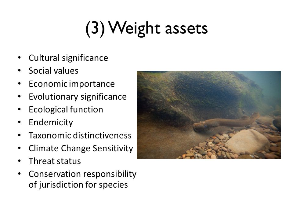 (3) Weight assets Cultural significance Social values Economic importance Evolutionary significance Ecological function Endemicity Taxonomic distinctiveness Climate Change Sensitivity Threat status Conservation responsibility of jurisdiction for species