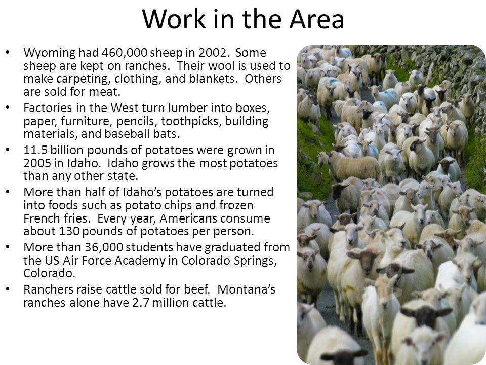 Work in the Area Wyoming had 460,000 sheep in 2002.